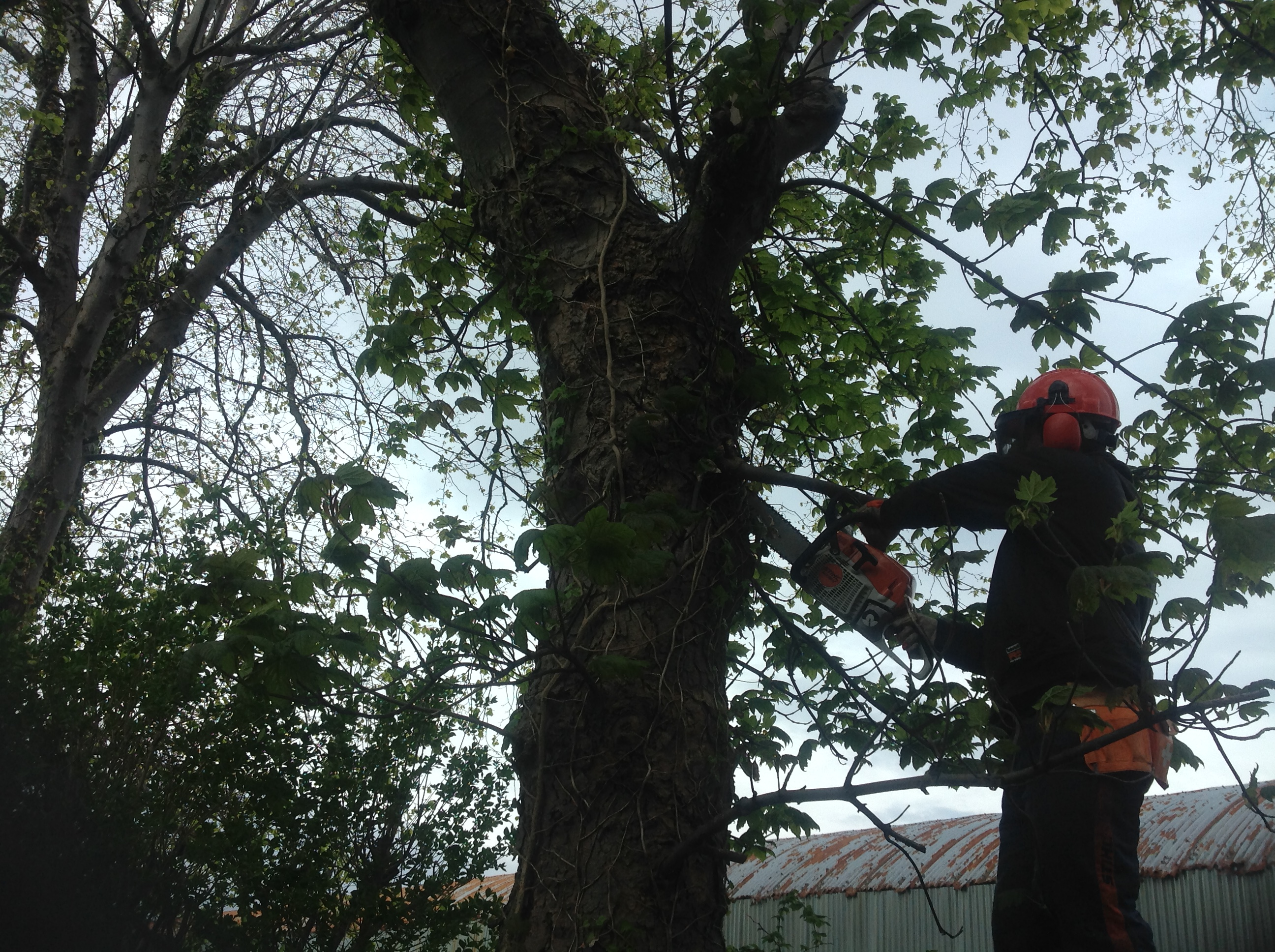 Tree maintenance Largs